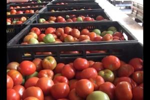 Caixa de tomates