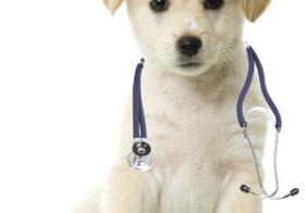 Benefícios dos Animais à Saúde Humana.