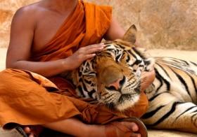 Resolva Conflitos Como Um Mestre Zen