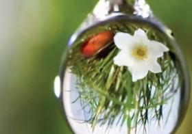 Sistema Floral de Bach