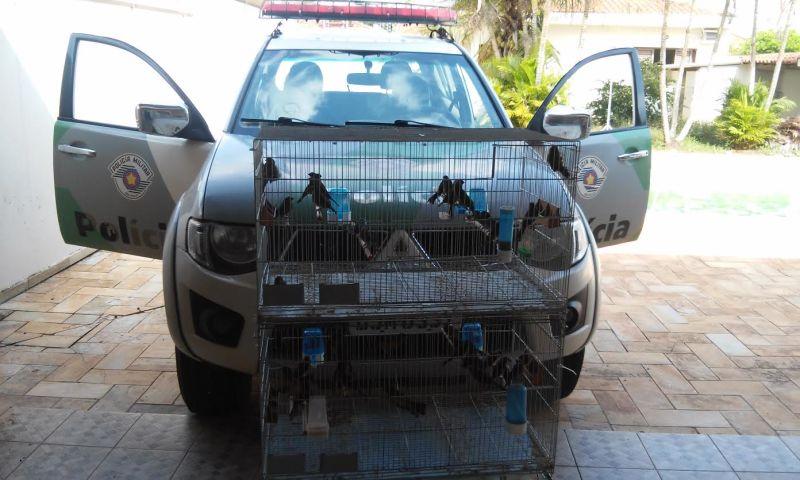 Pássaros apreendidos pela Polícia Ambiental