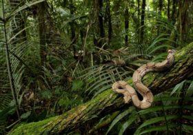 O veneno da cobra