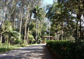 Horto Florestal: conscientiz(ação)