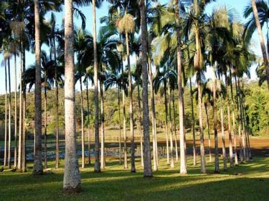 Alerta está sendo dado em virtude da área da unidade florestal ter capivaras (hospedeira da doença) circulando livremente