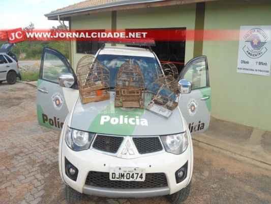Crime foi registrado em Iracemápolis (Foto: Polícia Ambiental)