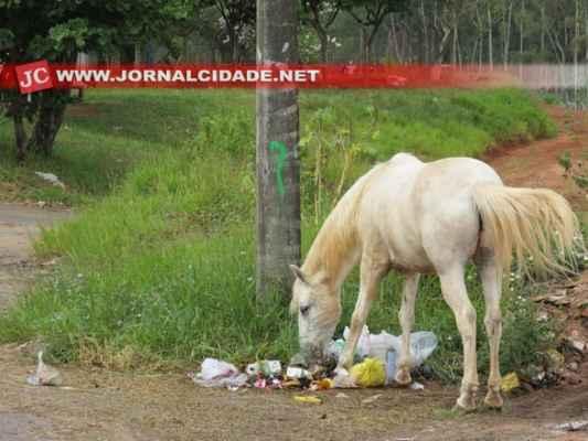 Cavalo se alimenta de lixo em rua de Rio Claro