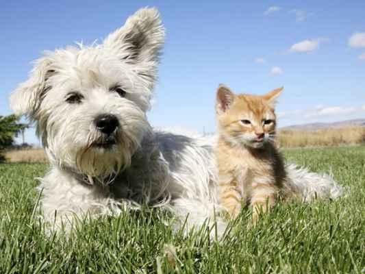 Além dos cães, vacina contra a raiva também é aplicada em gatos