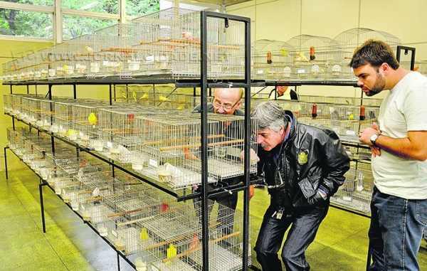 Exposição de Canários será realizada de terça a sábado