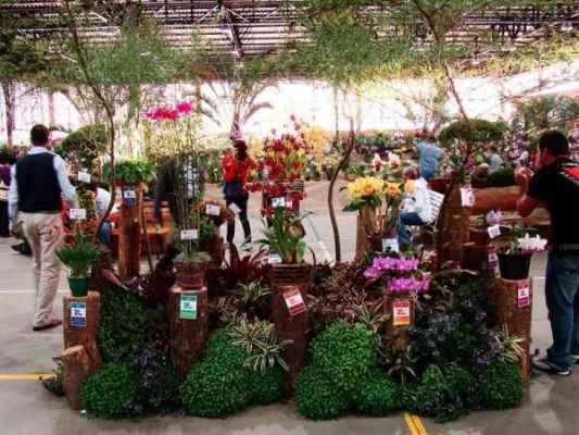 70ª Exposição Nacional de Orquídeas de Rio Claro pode ser visitada neste fim de semana