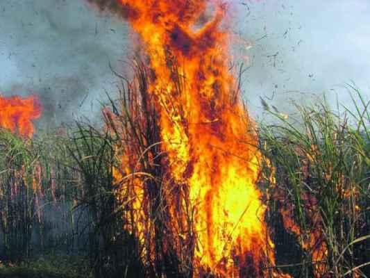 De acordo com a Coplacana a decisão da Justiça Federal prejudica os produtores de cana da região de Piracicaba