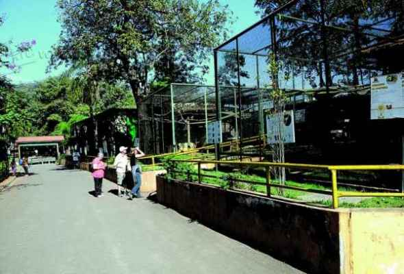 Zoológico de Piracicaba está entre as opções de passeio. Local abriga cerca de 422 animais, além de espécies exóticas
