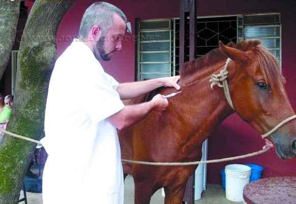 Liminar de 2013 obriga município a adotar medidas emergenciais para animais em situação de risco