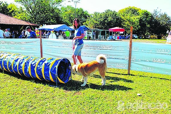 Entre as atrações do Agitacão haverá uma pista de agility, onde todos poderão brincar e cumprir o roteiro de obstáculos