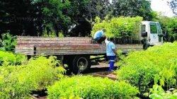 Eventos retratam a importância das árvores para o ser humano e ações de recuperação do meio ambiente