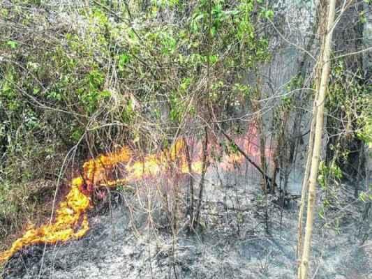 Incêndio que atingiu novamente a Floresta Estadual