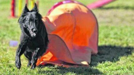Pequenos e graciosos quando filhotes, muitos cães são abandonados quando crescem e passam a exigir mais dedicação