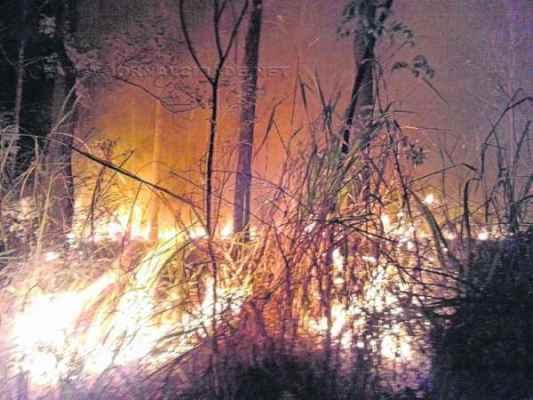 Foto enviada pelo leitor Paulo R. Ortiz mostra um dos dois incêndios que atingiram a Floresta Estadual na sexta e no sábado