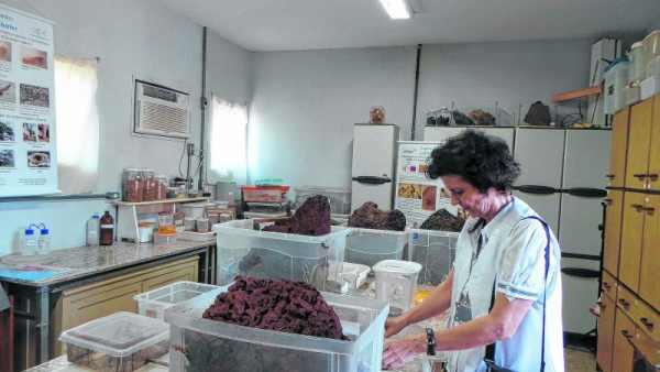 A Profª Drª Ana Maria Costa Leonardo, chefe do Departamento de Biologia da Unesp, que estuda a biologia dos cupins