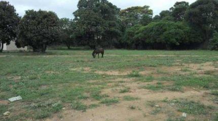 Flagrante de animal solto na Rua M-7, no bairro Jardim Independência. Serviço de recolhimento de animais atualmente está suspenso em Rio Claro