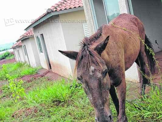 Cavalo 'ocupa' moradia a ser entregue em projeto habitacional da prefeitura com a Caixa Econômica Federal