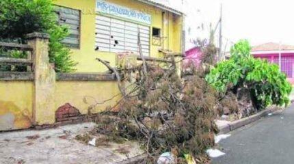 SITUAÇÃO DE RISCO: além do abandono do prédio, quedas de galhos inquietam vizinhos