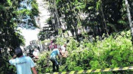 Funcionários da prefeitura e bombeiros realizam corte de árvore no Jardim Público. Operação continua nesta terça-feira (3)
