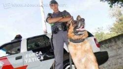 Soldado Taglietti é um dos integrantes da equipe do canil da Polícia Militar de Rio Claro. Junto ao pastor