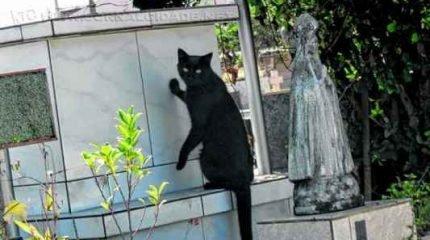 Gatos no Cemitério Municipal São João Batista recebem cuidados por uma voluntária. Animais foram abandonados no local