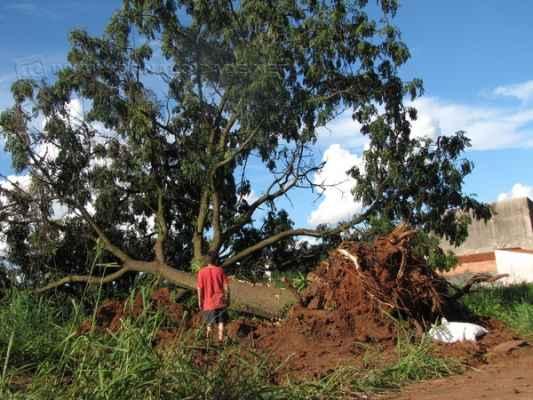 Remoção de árvore comoveu moradores do Vila Paulista. Mesmo com medida compensatória, população desaprovou retirada