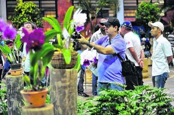 O evento conta com estandes exclusivos para a venda de orquídeas das mais variadas espécies, com preços a partir de R$ 20