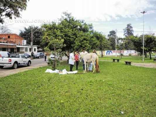 Uma equipe de veterinários do Centro de Controle de Zoonoses da FMS cuidou do ferimento do animal ainda no local