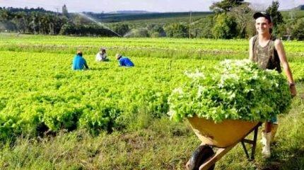 Agricultura Familiar em Rio Claro/SP