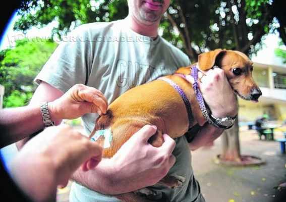 A campanha municipal de vacinação antirrábica contempla apenas os animais de pequeno porte (cães e gatos)