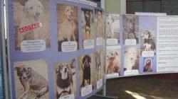 Painel, que apresenta alguns dos cachorros que esperam por adoção, está na entrada da antiga Estação Ferroviária