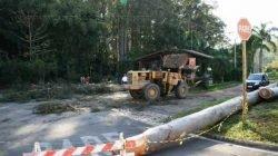 Equipes trabalham para a remoção do eucalipto no antigo Horto Florestal