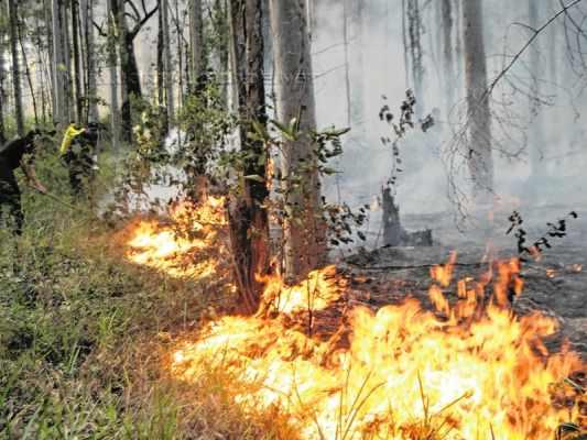 Incêndio ocorrido na Floresta Estadual em maio do ano passado (Foto: Arquivo JC)
