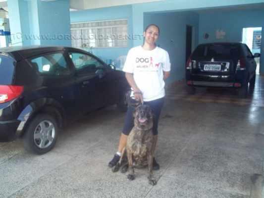DogWalker2