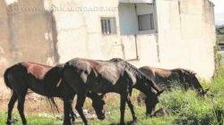 Queixas da população envolvendo animais de grande porte são frequentes (Foto: Arquivo)