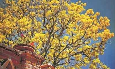A primavera é a estação mais florida do ano e marca a transição entre um período seco de outro chuvoso