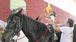 Uso do cavalo como forma de terapia teve início com Hipócrates em 400 a.C. [foto ilustrativa]