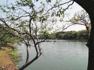 Lago Azul - O Lago Azul tem mais de 130 mil metros quadrados para toda família aproveitar. Há quadras de esportes, pista de skate, academia ao ar livre, parquinho para a criançada e áreas verdes para se deitar e aproveitar o pôr do sol.