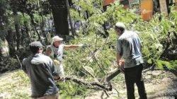 Funcionários fazem corte de árvore em praça. Cortes e podas devem ser autorizados pela Sepladema