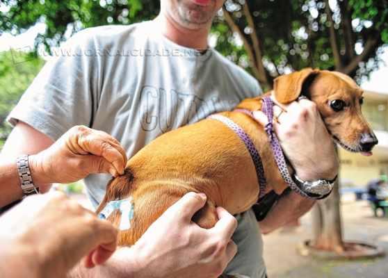 Campanha vacina gratuitamente cães e gatos nos municípios (Foto: Marcelo Camargo/Agência Brasil)