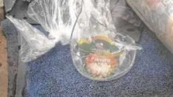 Vidros e copos quebrados jogados no lixo causam danos