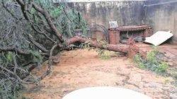 Árvore caiu durante um temporal que atingiu Rio Claro. Moradora diz não ter condições para pagar pela retirada do espécime