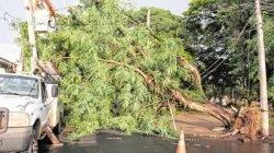 Árvore foi derrubada pelo vento e caiu sobre a rede elétrica no temporal de sexta-feira (4)