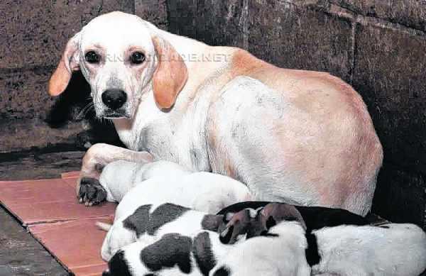 A maioria dos animais de pequeno porte abandonados no município vai parar no Canil Municipal (Foto: Arquivo/PMRC)