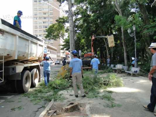 Equipe da Secretaria Municipal de Manutenção e Paisagismo corta árvore no Jardim Público