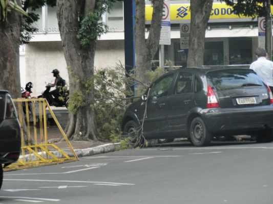 Guarda civil municipal foi acionado pelos motoristas. Queda do galho chamou a atenção de curiosos