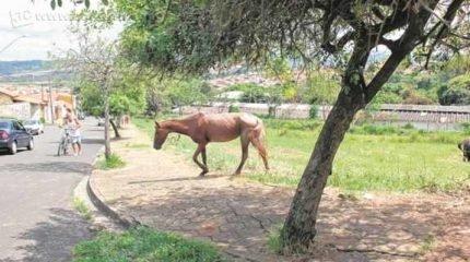 """Cavalo solto em área pública ao lado da Escola Municipal """"Armando Grisi"""", no Jardim Paulista II, causa risco à segurança de alunos e da população em geral"""